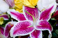 Jollydays DE Workshop Dekorieren mit Blumen