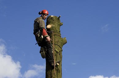 Monkey Climbing in Hanau (Hessen)