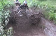 Quad Offroad Special - Pachfurth