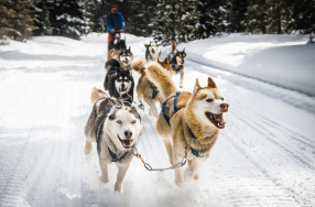 Schlittenhunde Workshop