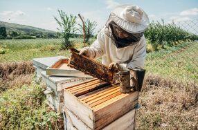 Bienen und Imker Workshop