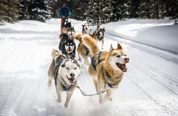 Schlittenhunde Workshop in Hirschegg